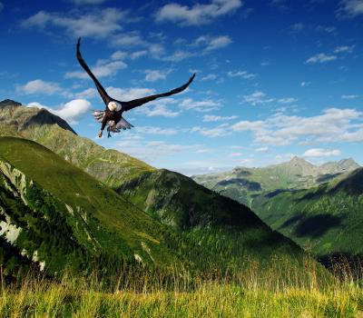 Aigle © Getty Images